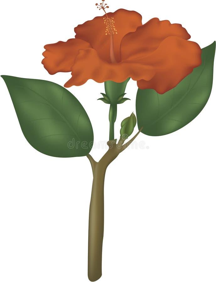 стержень hibiscus иллюстрация вектора