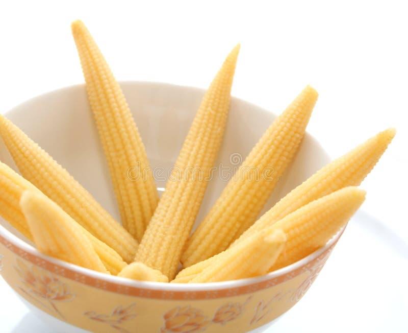 Стержни кукурузного початка стоковые изображения