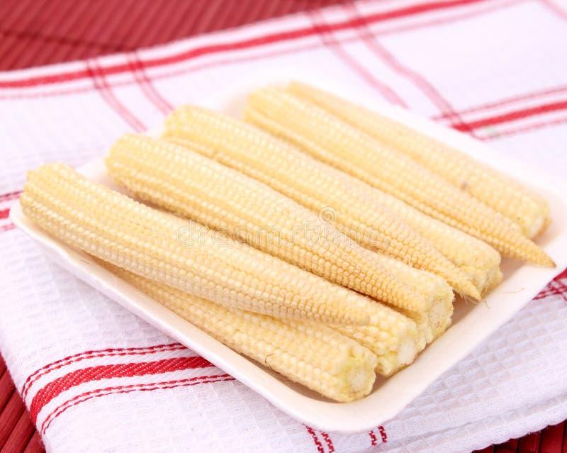 Стержни кукурузного початка стоковые фото