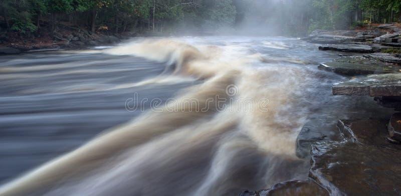 стерляжина реки стоковое изображение
