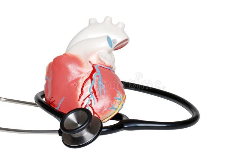 стетоскоп сердца стоковое изображение rf