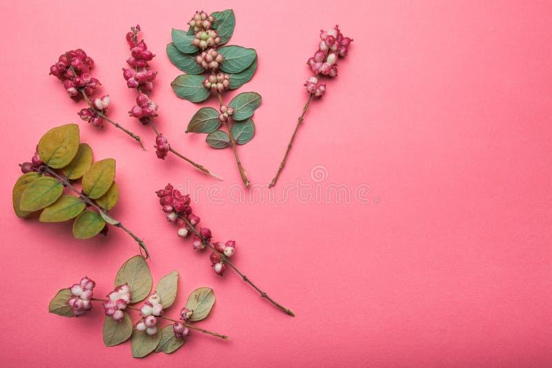 Стилизованная картина зеленых листьев и красных диких ягод Дикие трава и листья леса на красной предпосылке стоковое изображение