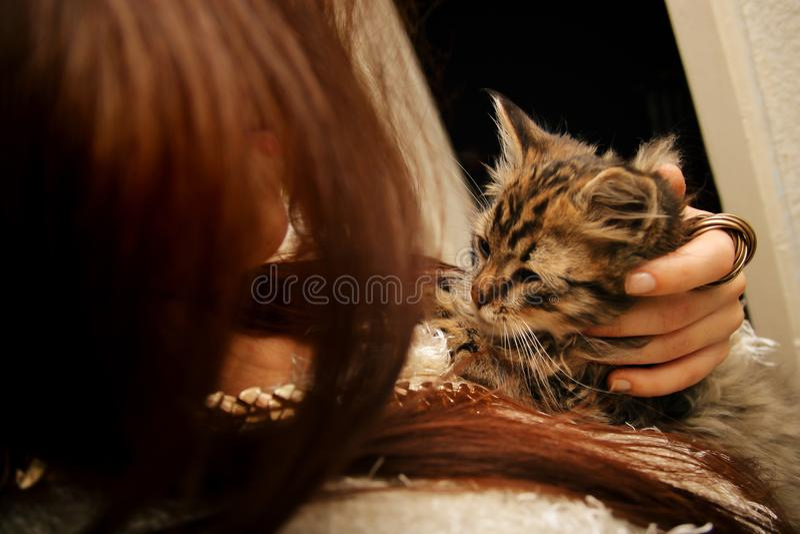Стильная женщина держа милого сладостного маленького котенка, первых моментов на стоковая фотография rf
