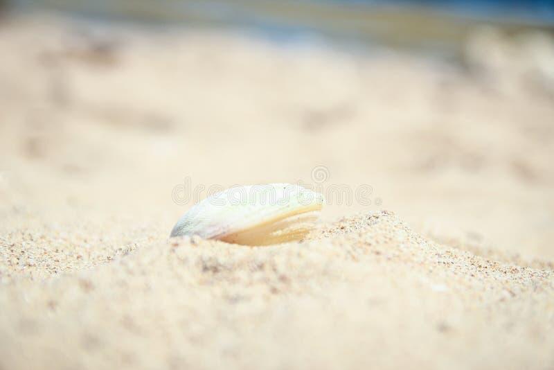 Стильно красивый коралл seashell на предпосылке песка на море стоковое изображение rf
