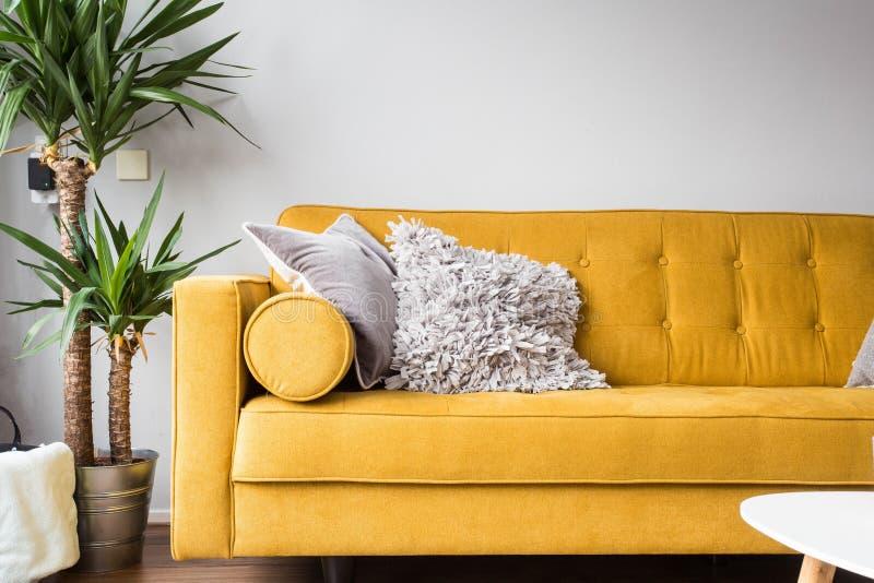 Стильный интерьер живущей комнаты с удобными желтыми софой и зеленым растением стоковое фото rf