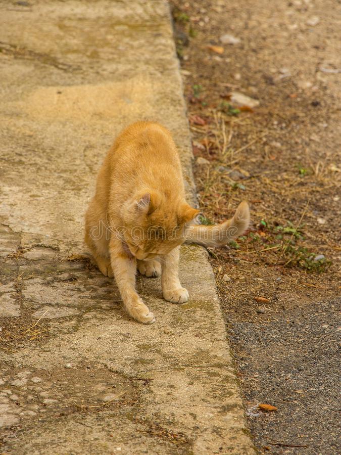 Стирка кота стоковые фото