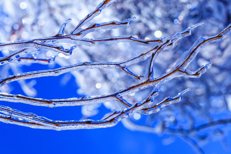 Стихийное бедствие в Канаде с замороженными бутонами и сосульками вися от ветвей дерева Реальные ростки льда в холодной канадской стоковое фото rf