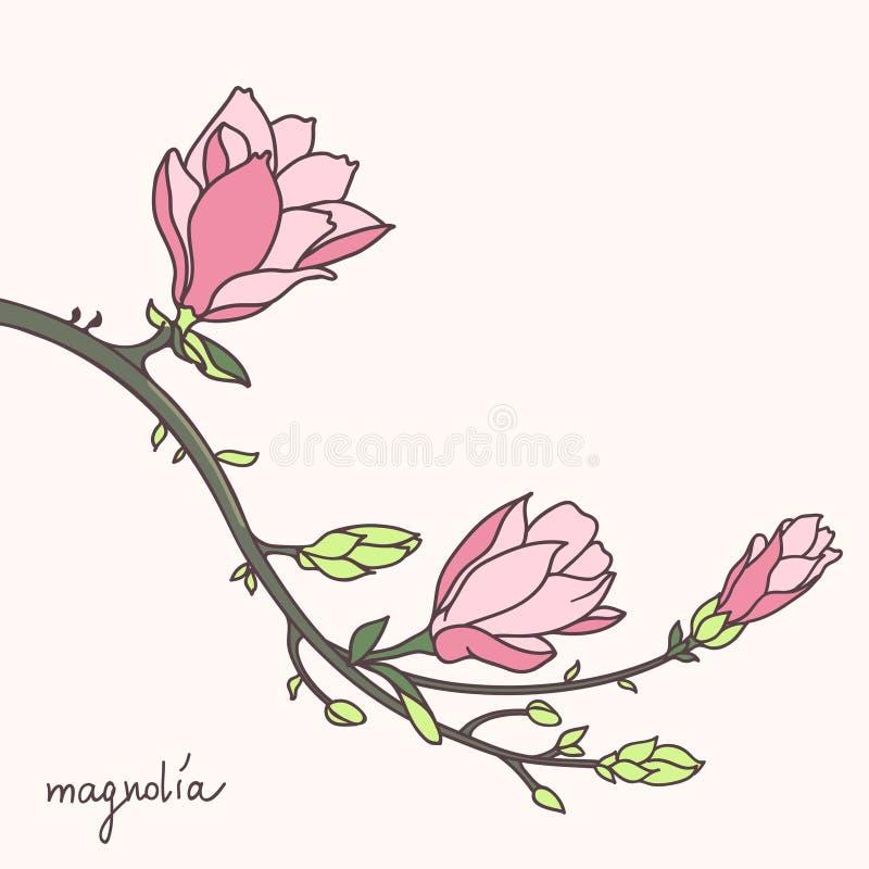 Стильный цветок магнолии иллюстрация штока