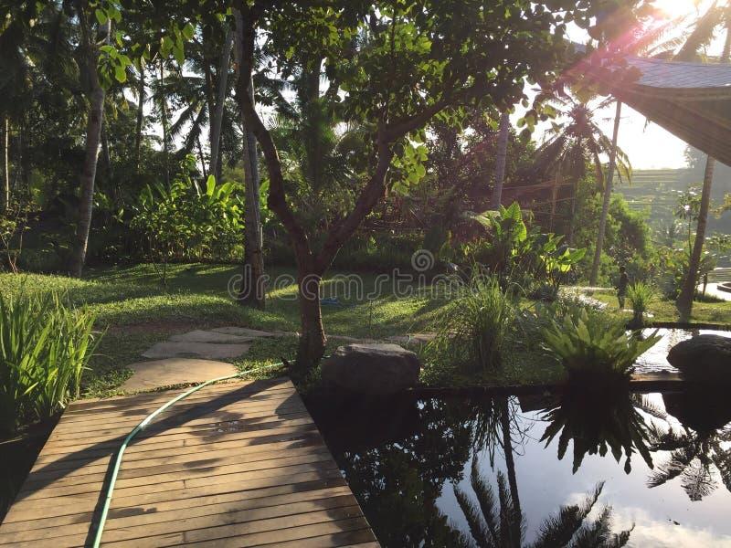 Стиль Бали сада ландшафта стоковые изображения