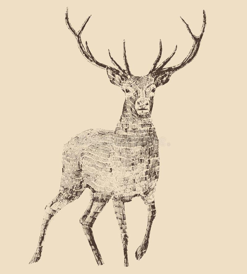 Стиль гравировки оленей иллюстрация штока