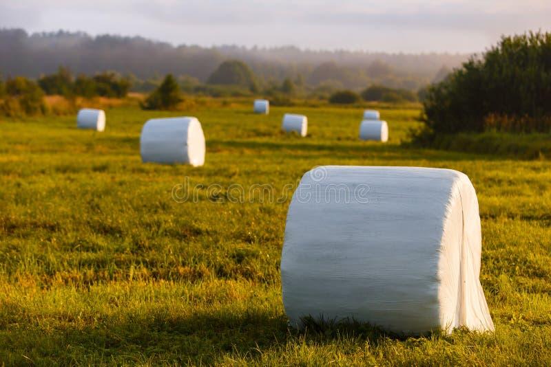 Стога сена для поголовья упаковали в белой пластмассе в поле стоковая фотография rf