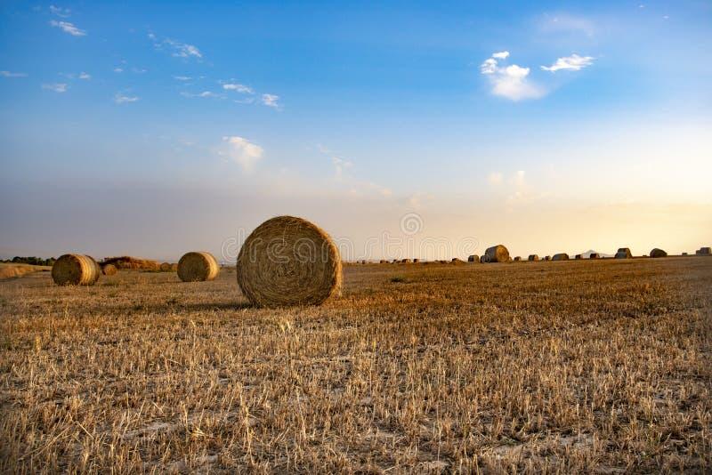Стога сена на поле стоковые изображения rf