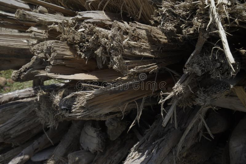 Стога сухих и мертвых стержней и ветвей дерева естественно Изолирован стоковая фотография