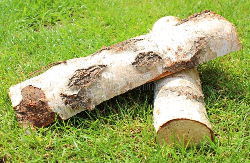 Стог отрезанного швырка журналов от дерева серебряной березы стоковое фото rf