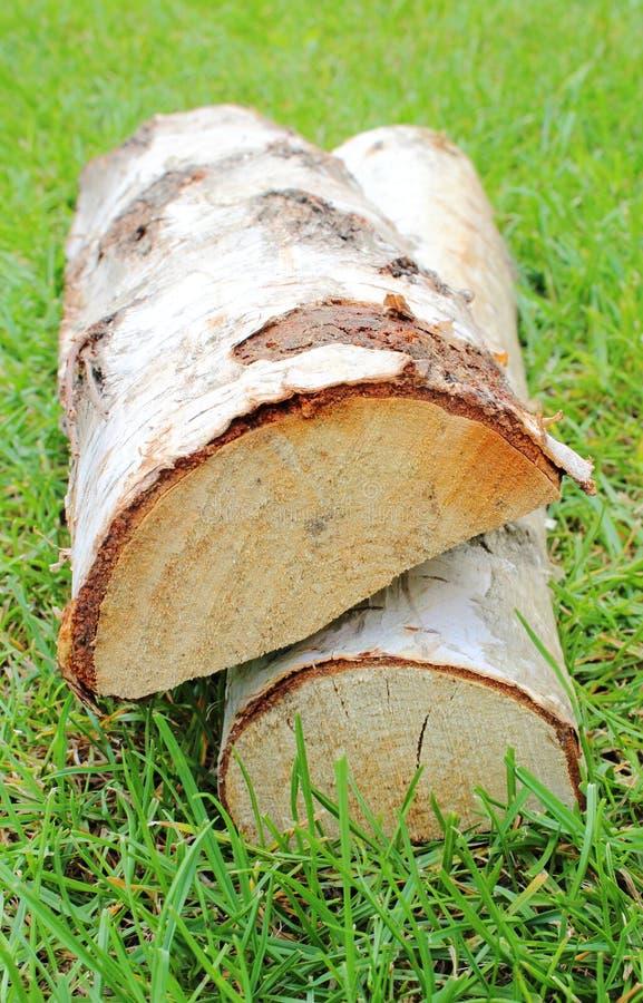 Стог отрезанного швырка журналов от дерева серебряной березы стоковые фотографии rf