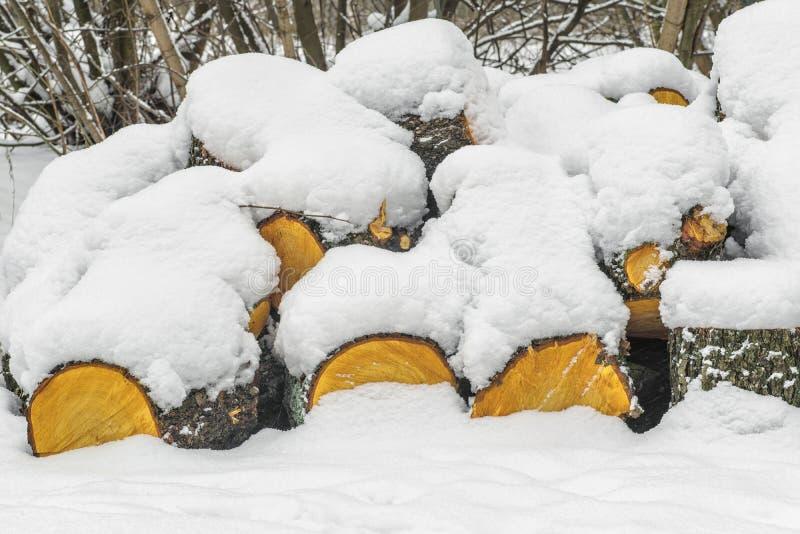 Стог отрезанной древесины под снегом, woodpile штабелированного швырка под снегом стоковые изображения rf