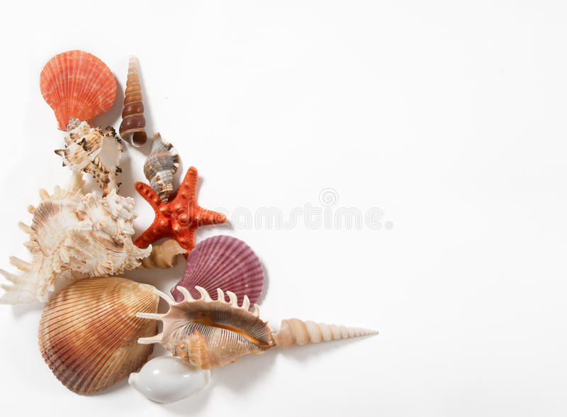 Стог раковин и морских звёзд стоковые изображения