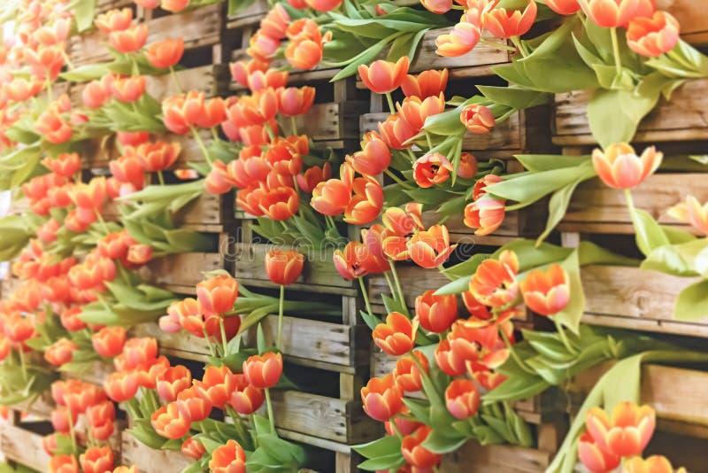 Стог тюльпанов стоковые изображения rf