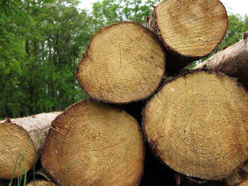Стог хвойного дерева в лесе, валить стволы дерева сложил вверх стоковые фото