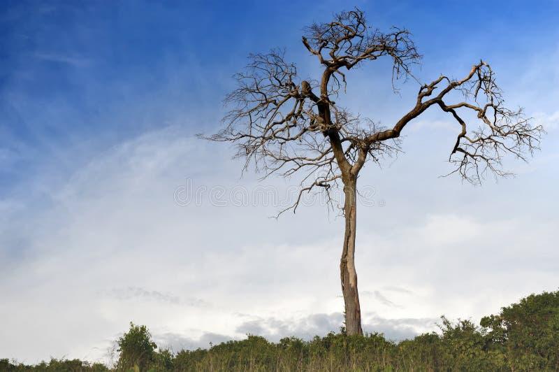 Стойка дерева смерти самостоятельно стоковое фото