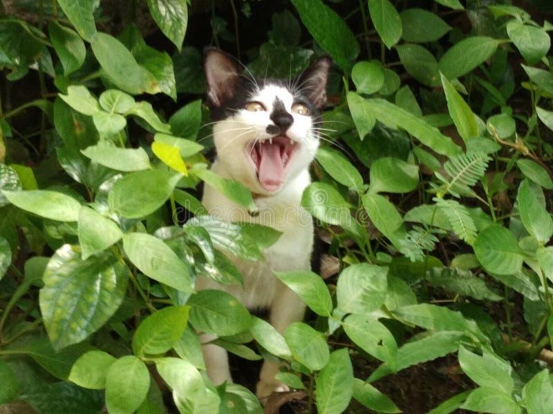 Стойка котенка в заводах стоковые изображения