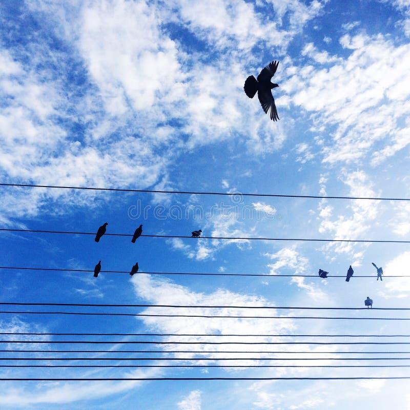 стойка птицы на электрическом проводе с голубым небом стоковые изображения