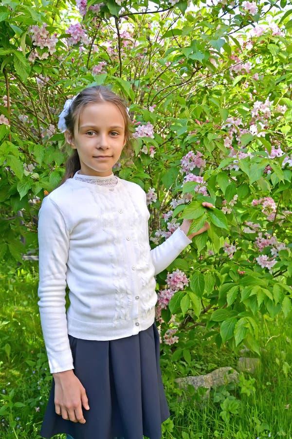 Стойки грейдера девушки первые около цвести veygela в парке стоковая фотография rf