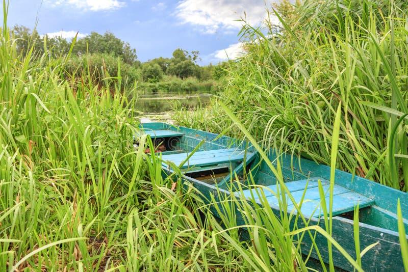 Стойки старые зеленые шлюпки спрятанные в тростниках на банке спокойного реки на фоне тихой поверхности реки стоковое фото