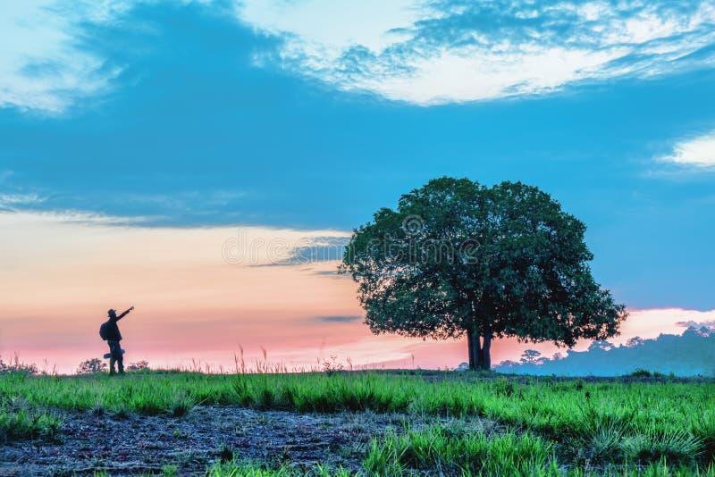 Стойте самостоятельно дерево на поле травы с положением человека близко и руке пункта к дереву с предпосылкой sunrising стоковые изображения rf