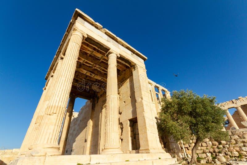 Столбцы виска и оливкового дерева на акрополе Афин, g стоковое фото