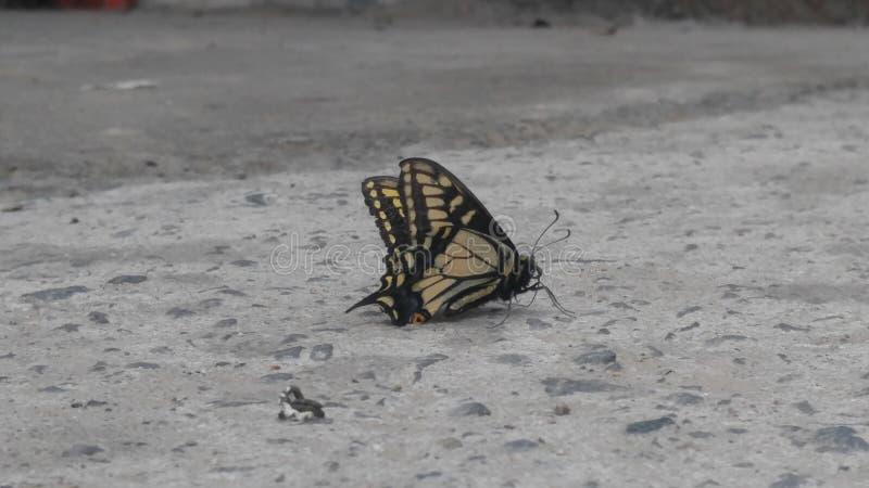 Сторона бабочки стоковые фото
