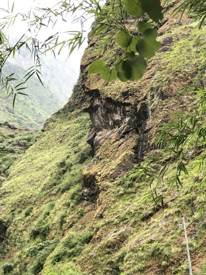 Сторона в лесе стоковое изображение
