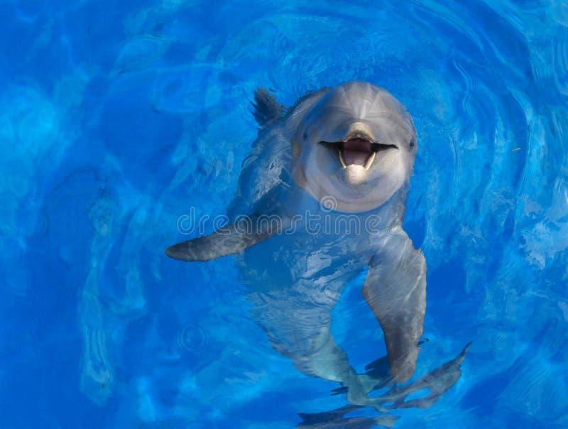 сторона дельфина стоковое изображение rf