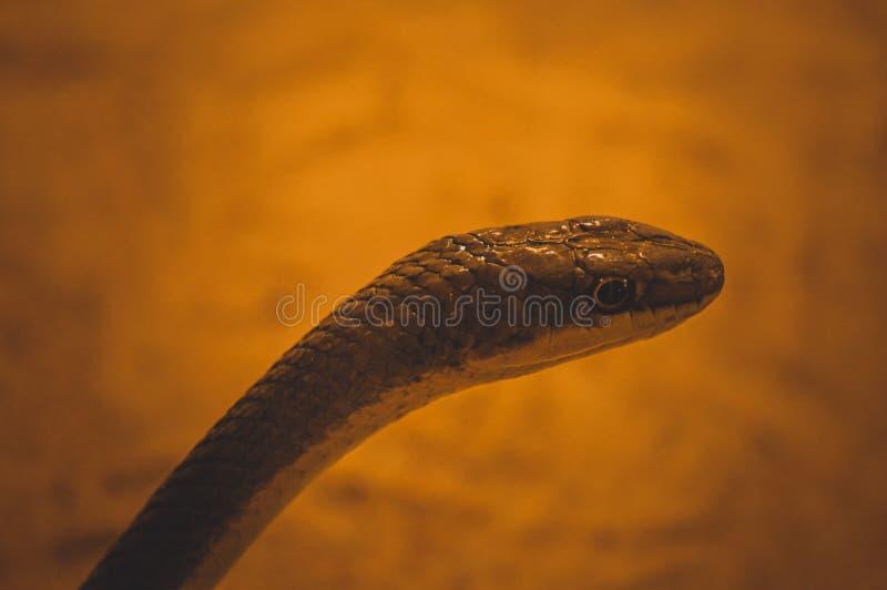 Сторона змейки стоковые фотографии rf