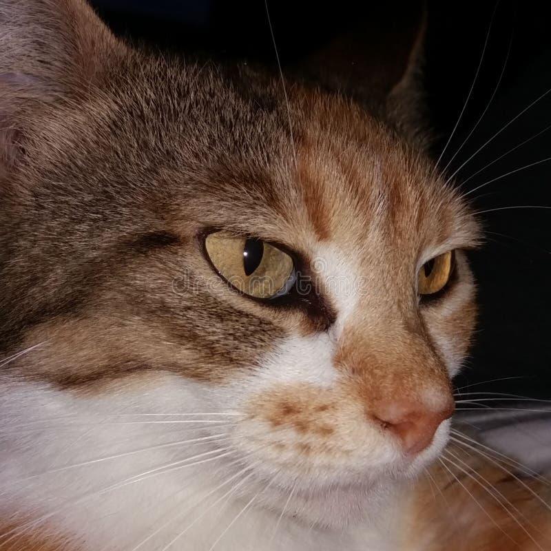 Сторона кота крупного плана стоковая фотография