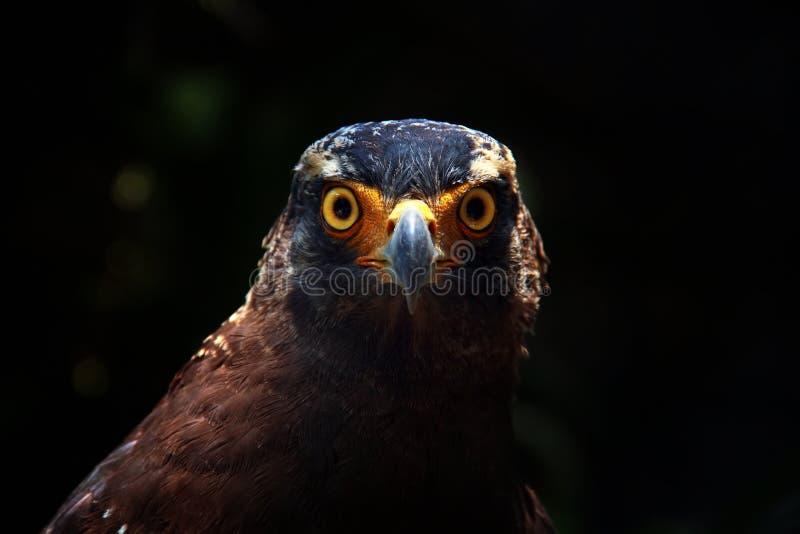 Сторона орла стоковое фото