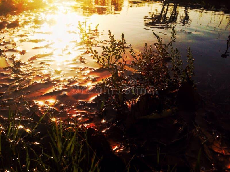 Сторона пруда стоковое фото rf