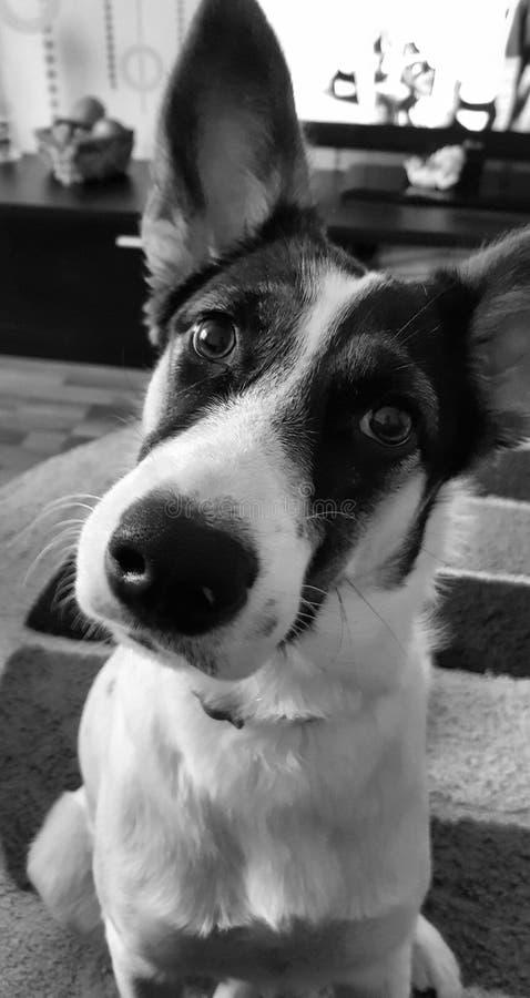 Сторона собаки стоковое изображение rf