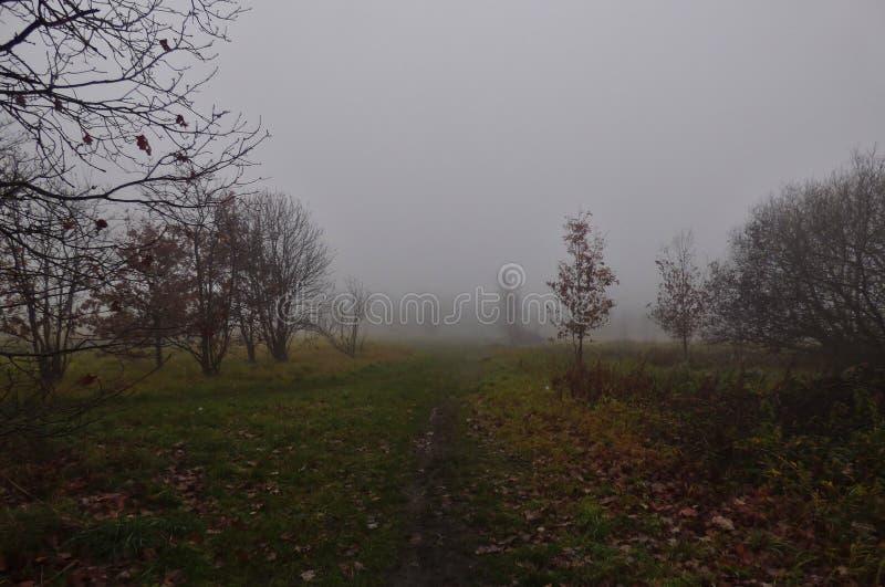 Сторона страны тумана тумана поля осени стоковые фотографии rf