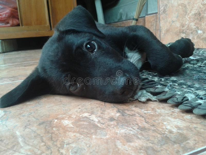 Сторона Doggy стоковое фото rf