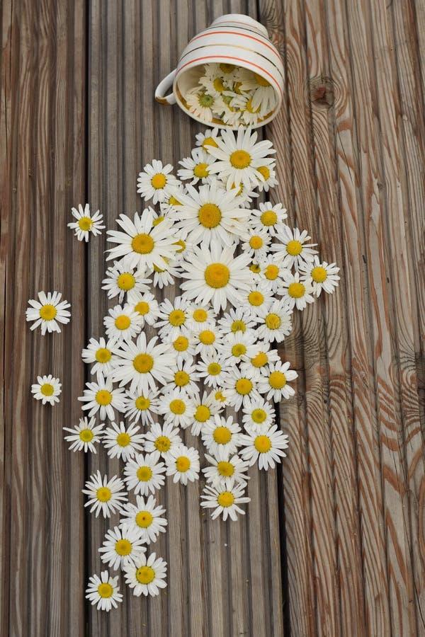 Стоцветы на деревянной предпосылке стоковое изображение