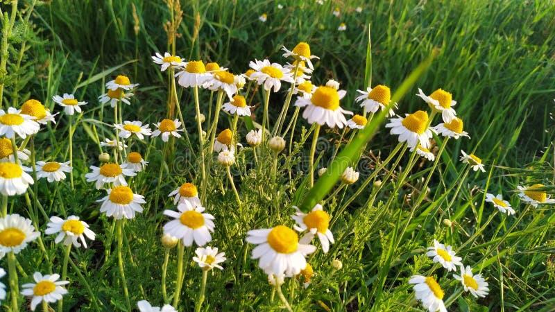 Стоцветы принимая sunbath стоковое изображение
