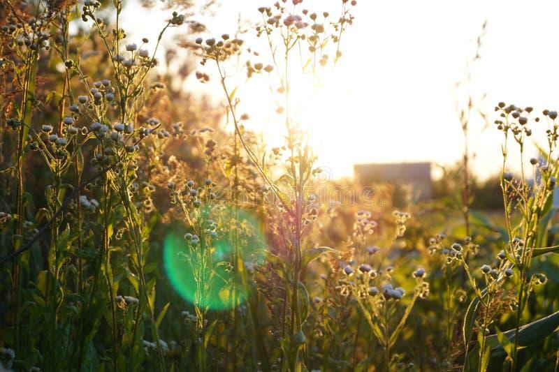 Стоцвет на заходе солнца стоковое фото