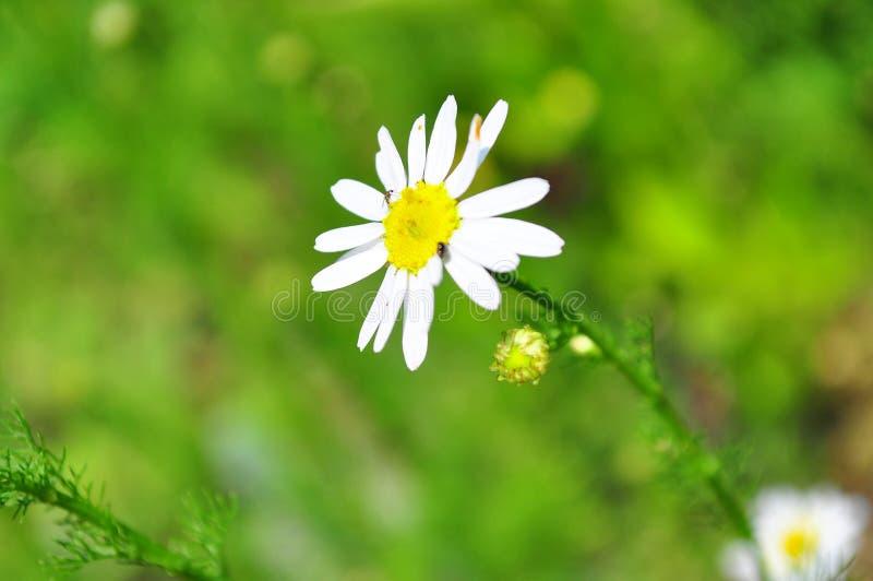 Стоцвет окруженный зеленым полем стоковые фото