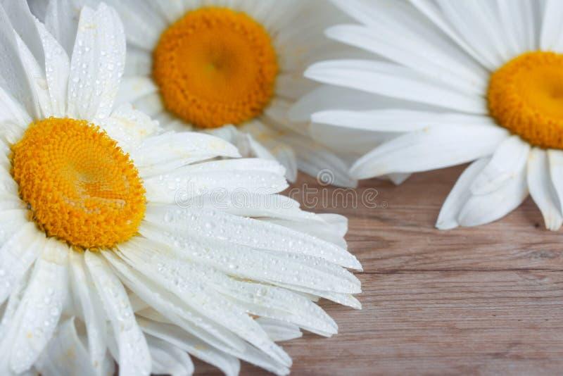 Стоцвет цветет в падениях воды, на деревянном столе стоковое фото rf