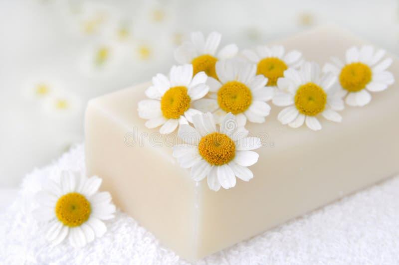 стоцвет цветет мыло стоковая фотография