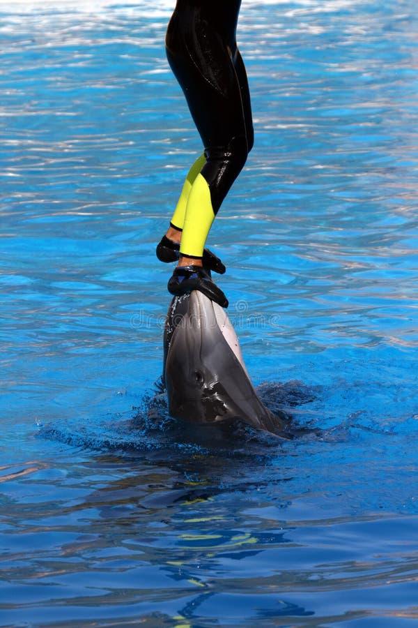 стоять дельфинов стоковые изображения rf