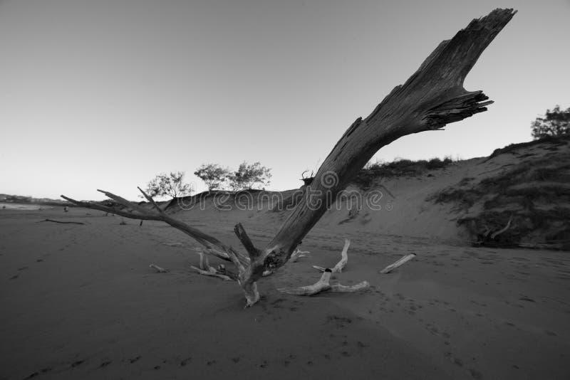Стоящая фирма в песке стоковая фотография