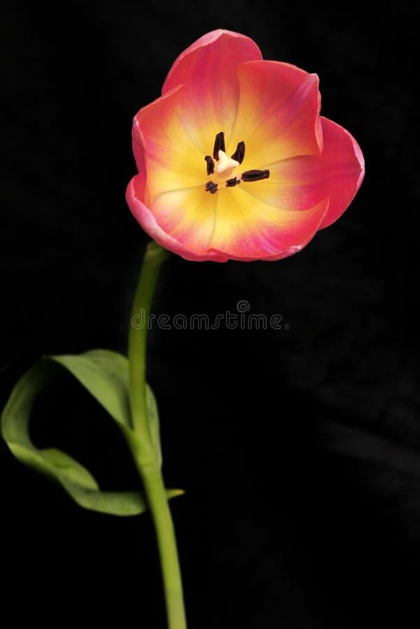 Download стоящее высокорослое стоковое фото. изображение насчитывающей цветки - 88120
