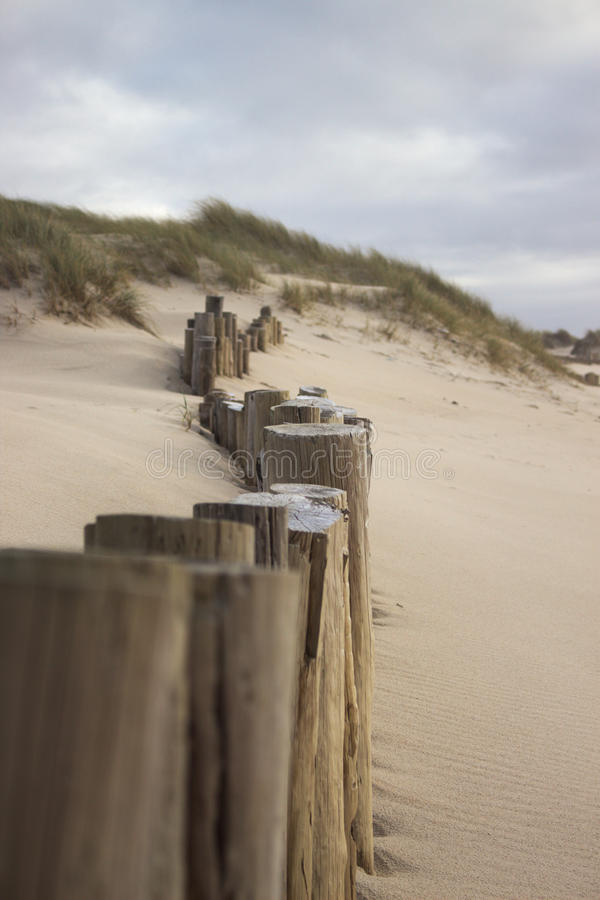 Столбы на пляже стоковые изображения rf